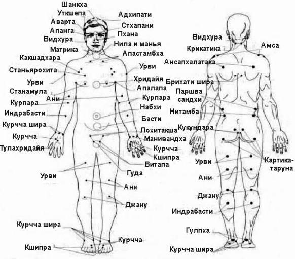 Расположение марм на теле
